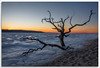 Magnificent Desolation (richpope) Tags: sandyhook newjersey sandyhookbay frozen sunset jerseyshore winter tree silhouette gatewaynationalrecreationarea