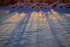 20171227-BB7A0135.jpg (rethwyll) Tags: blue caledonia cattails christmas gold michigan sunset weeds