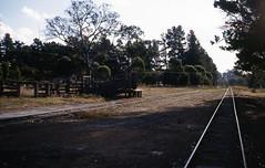 2931 Dinninup 9 April 1982 (RailWA) Tags: railwa philmelling westrail 1982 dinninup