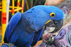 Key West (Florida) Trip 2016 0568Ri 4x6 (edgarandron - Busy!) Tags: florida keys floridakeys keywest birds nancyforrester nancyforresterssecretgarden secretgarden