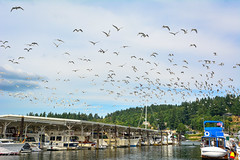 (Flock of Seagulls) Gig Harbor, Washington (SonjaPetersonPh♡tography ♡ Merry Christmas!) Tags: washington washingtonstate stateofwashington pugetsound tacoma nikon nikond5200 gigharbor harbor marina olympicpenninsula historicwaterfront tacomanarrowsbridge shops boats piers historicbuildings boutiques finedining usa piercecounty tourists touristdestination town bay