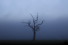 (gavin.hoskins) Tags: cumberland cumbria outside outdoors canon canoneos5dmarkiii 5dmarkiii tree silhouette branches fog blue tones shadow landscape winter