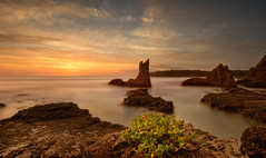 How Would You Feel (EmeraldImaging) Tags: cathedralrocks cathedralrock kiama wollongong nsw southcoast sydney sunrise seascape waves le longexposure rocks plant cliff clifftop