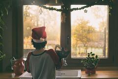 Navidad en mi cocina (Monica Fiuza) Tags: childhood cat gato pet mascota galicia enmicasa minavidad juegolvm xmas christmas navidad