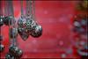 red ... (miriam ulivi) Tags: miriamulivi nikond7200 rosso red macro bokeh