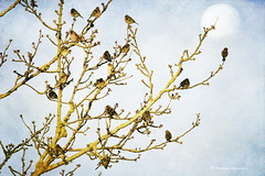 18 (Monica Muzzioli) Tags: tree birds texture textures branches nature 18 eighteen