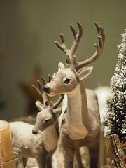 Schaufensterbummel am 26.12.2017 (1elf12) Tags: weihnachten rentiere xmas christmas germany deutschland braunschweig schaufenster shop window