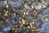 slow melt (1crzqbn) Tags: bokeh sunlight ice wet branches tree light dof depthoffield