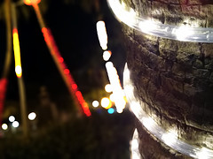 Christmas from yesterday (Guilherme Alex) Tags: nature city tree lights color colorfull focus cellphone life cutout christmas night mycity mylife myworld amateur amazing beatifull