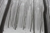 Snow forest (ZUHMHA) Tags: bulgarie bulgaria winter hiver snow tree forest wood buzludja brouillard brume fog tempête tronc gel ice