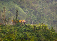 Weird buses (ep_jhu) Tags: vegetation trees vehicles schoolbus 7d nature two puertorico pr green canon yellow weird stilts