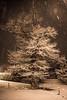 The King (Steff Photographie) Tags: neige nature arbre art artpix annecy hiver beautiful balade exterieur holidays inoubliable jolie landscape magnifique night nb paysage pictures street