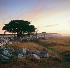 Stone Wall - Velvia 100 exp* (magnus.joensson) Tags: sweden swedish öland island sunrise alvaret hasselblad 500cm zeiss planar 100mm cf fuji velvia 100 exp exp2007 e6 6x6 81b