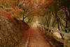 追楓 - 福壽山農場 (Lavender0302) Tags: 楓葉 松盧 福壽山農場 和平 台中 台灣 taiwan maple