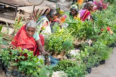 Colors of Varanasi...India 2017 (geolis06) Tags: geolis06 asia asie inde india uttarpradesh varanasi benares gange ganga ghat inde2017 olympusgeolis06 street rue seller woman women portrait streetseller vendeusederue olympus olympusm1240mmf28 olympuspenf banaras