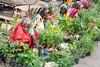 Colors of Varanasi...India 2017 (geolis06) Tags: geolis06 asia asie inde india uttarpradesh varanasi benares gange ganga ghat inde2017 olympusgeolis06 street rue seller woman women portrait streetseller vendeusederue olympus olympusm1240mmf28 olympuspenf
