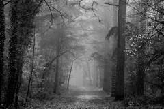 Zandenboslaan (dirksen2305) Tags: lane path forest woodland black white bw veluwe nunspeet netherlands nature