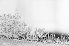 Frost - 100/100 X (mfhiatt) Tags: img92181217jpg frost cold winter minimalist minimalism minimal 365the2017edition 3652017 day364365 30dec17 100xthe2017edition 100x2017 image100100