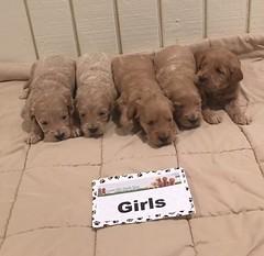 Kasey Girls pic 2 12-31