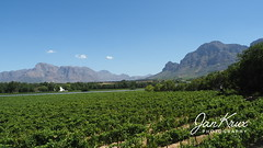 Lust En Vrede (jan-krux photography - thx for 2.5 Mio+ views) Tags: lustenvrede lust frieden winery wine farm western cape westkap south africa suedafrika paradise paradies olympus omd em1mkii landscape landschaft himmel sky blue green blau gruen weinreben berge mountains