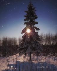 ~ another tree ~  Riddarhyttan, Sweden (Tankartartid) Tags: countryside landskap landsbygd landscape picsart västmanland riddarhyttan nordic norden europe sverige sweden soligt sunny snow sun sol vinter winter natur nature trees tree instagram ifttt