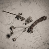 Dried flowers and a genuine squirrel-chewed pine cone (N.the.Kudzu) Tags: home tabletop stilllife dried flowers pine cone canon70d lightroom