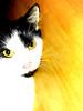 purrrrr (Hope2b) Tags: hss sliderssunday kitty cat feline purr golden