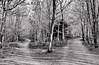 Left or Right (Francesco Impellizzeri) Tags: brighton england monochrome black white forest trees canon landscape