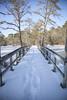 IMG_3296_pp_M (OceanStorme) Tags: canon5dmarkii canon24105mmf4 birchgrovepark northfieldnj snow bombcyclone