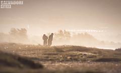 Big Windy Day IV-97 (steph13170) Tags: eau water wateraddict fave paysage seascape sea waves extérieur mer rivage kitephotographer kitephotographyaddict kitepics kitesurf kiteboarder kitepower kitesurfing kite littoral photo photooftheday picoftheday sport glissattitude sun paisagem soleil ciel vent mistral wind