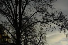 autumn snow tree house (2) (fdfotografie) Tags: baum haus himmel ast äste zweige ausschnitt herbst schnee dunkel natur kultur outdoor tageslicht dslr farbfoto querformat d7100 sonnenlicht tiefstehendesonne nachmittag silhouette wolke serie