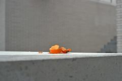 Paris XIII (Joseff_K) Tags: paris mur wall orange clementine peaudorange orangepeel clementinepeel peaudeclementine ecorcedorange ecorcedeclementine slide filminversible ektachrome diapositive leica leicam6