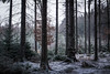 Lets not loose our path (Petr Sýkora) Tags: les sníh zima happynewyear nature forest winter show snow lost lostintime 2018 czech