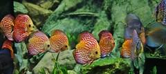 Fische (Hugo von Schreck) Tags: hugovonschreck fish fisch canoneos5dsr tamron28300mmf3563divcpzda010 onlythebestofnature