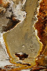 Jurassic Guitar_27A0672 (Alfred J. Lockwood Photography) Tags: alfredjlockwood blacksandbasin abstract landscape guitar geothermalrunoff microbialmat extremophiles thermophiles yellowstonenationalpark summer morning wyoming