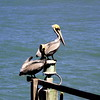 PELICAN (R. D. SMITH) Tags: pelican squareformat florida bird sky grissommemorialwetlands crop canoneos7d