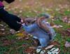 2017-12-02-0100 (Kevin Maschke) Tags: london fuji fujifilm fujifilmxt2 fujixt2 fujix city londoncity londonstreets nature outdoors air freshair squirell animal wildlife
