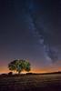 La encina y la vía (II) (Javier Rosano   Un poquito de fotografía) Tags: red 1740 a7 a7ii árbol canon encina estrella ii javierrosano lactea linterna madrid15 makingof nocturna segovia sony via