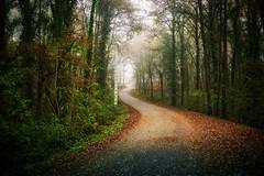 Foggy road (IrieShooting) Tags: fog niebla frio otoño otoñal invierno winter floresta forest trees road leaves fall vanishing point travel spain galiza countryside nature green woods