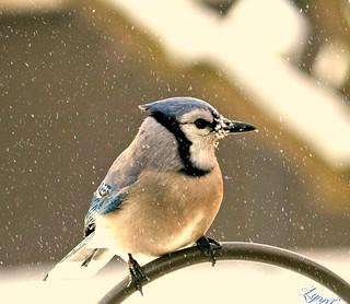 Snow on his beak