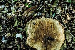 Natureza morta (taisratier) Tags: naturezamorta