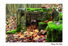 Retenue automnale / Autumnal retention (Thierry De Neys - Photographies) Tags: thierrydeneys fauquez brabant belgique belgium belgïe automne automnal feuille leaf mousse plantaardigemousse vegetablefoam rouille fer steel grille grate rooster vert green groen roest rust pierre stone steen deherfst autumn bokeh sol grond ground