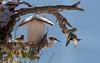 _JHS8786 (Bribes de terre) Tags: faune oiseau hiver chardonneret sittelle