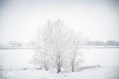 Winter in the Netherlands (Renate van den Boom) Tags: 12december 2017 boom europa gelderland highkey jaar landschap maand natuur nederland oosterhoutsewaard polder renatevandenboom stijltechniek uiterwaarden