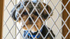 chewie. may 2016 (timp37) Tags: dog pet chewie 2016 may