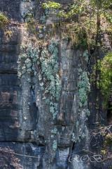 Malaysia-14975.jpg (CitizenOfSeoul) Tags: malaysia pulaulangkawi wildlife see langkawi andamanensee outdoor wildlebendetiere animal