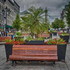 Park bench (swissgoldeneagle) Tags: parkbench sitzbank kanada montréal rx100 bench provinceofquebec provincedequébec 1x1 montreal sony sonycamera rx100m4 canada québec ca