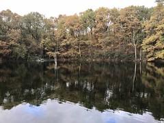 Herbst Köln Dünnwald (kallecolonia) Tags: autumn herbst köln cologne kölndünnwald