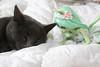 Chacha & Brindille ✿ (Karamel_Barbaris) Tags: bjd mysticdolls aria eglantine souris verte green mouse chat cat doll