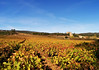 Chateau de Serres & vines (Niall Corbet) Tags: france occitanie languedoc roussillon aude serres chateau castle vineyard vignoble vine autumn